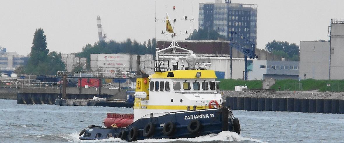 Catharina 11